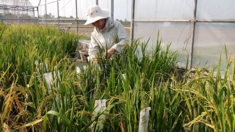 Đảm bảo số lượng, nâng chất lượng nguồn lao động nông nghiệp