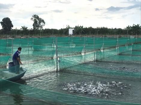 Xây dựng, phát triển vùng thủy sản chất lượng, đạt chuẩn