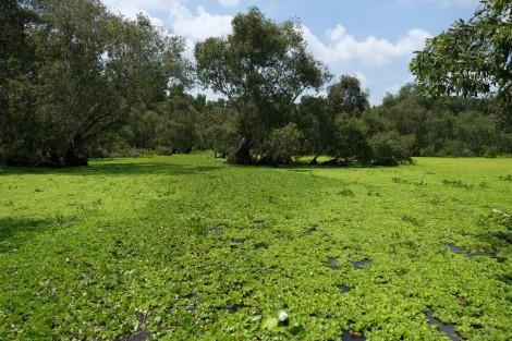 Chung tay phục hồi hệ sinh thái, bảo tồn đa dạng sinh học