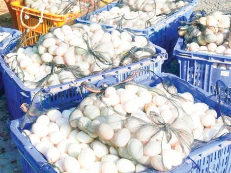 Giá trứng gà, vịt tiếp tục tăng