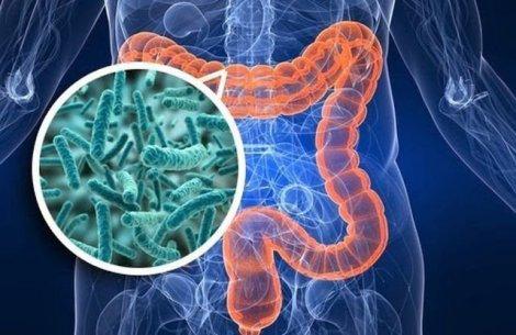 Khám phá hệ vi sinh đường ruột tìm phương thuốc trị COVID-19