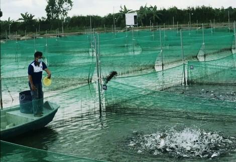 Sản xuất nông nghiệp theo tiêu chuẩn, đảm bảo an toàn vệ sinh thực phẩm