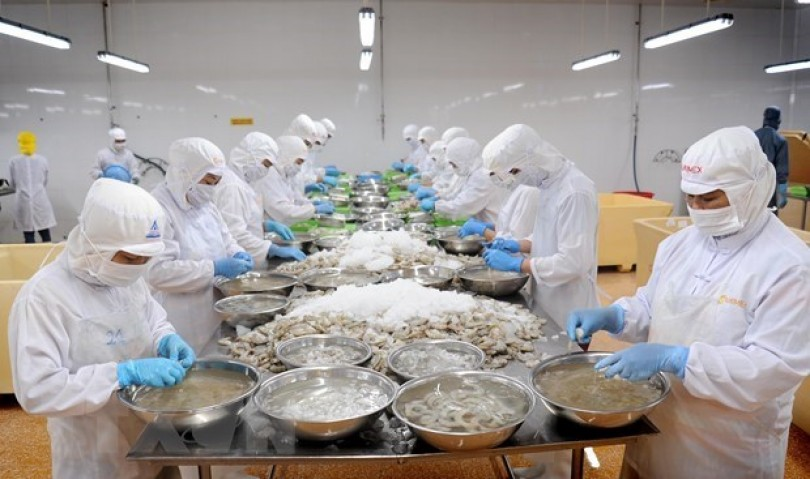 Ca Mau posts growth in shrimp exports in H1 despite pandemic