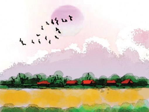 Cánh chim lưu lạc
