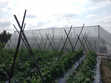Nông sản dồi dào, đảm bảo cung ứng nhu cầu thiết yếu