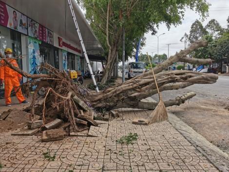 Mưa lớn kèm lốc xoáy làm sập, tốc mái 45 căn nhà và đổ ngã nhiều cây xanh trên vỉa hè