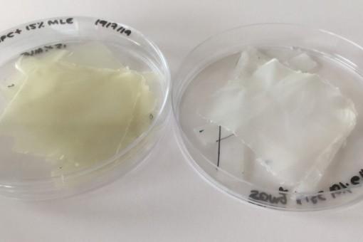 Màng nhựa hoạt tính sinh học làm từ lá xoài