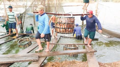 Phòng, khống chế và kiểm soát hiệu quả dịch bệnh trong nuôi thủy sản