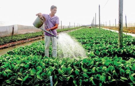Tìm giải pháp để nông sản đồng bằng vượt khó mùa COVID-19