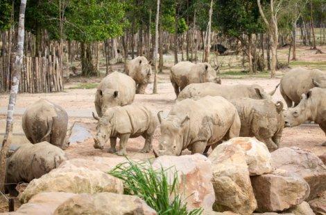 """Khám phá cuộc sống hoang dã """"thời giãn cách"""" bên trong công viên bảo tồn lớn bậc nhất châu Á"""