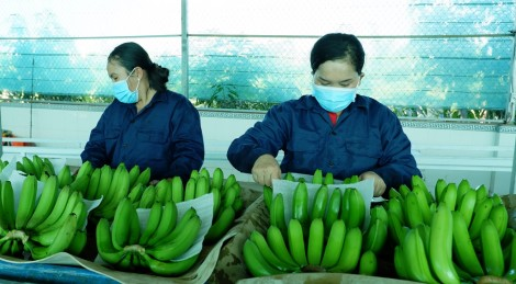 Xuất khẩu rau quả tăng 11,8%