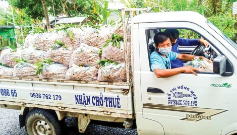 Hỗ trợ hợp tác xã đưa nông sản lên sàn thương mại điện tử