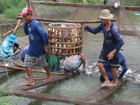 Bàn giải pháp khôi phục, phát triển chuỗi cá tra sau giãn cách xã hội