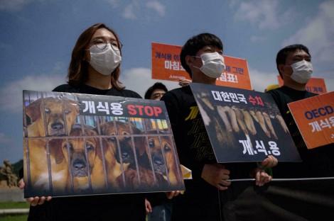 Hàn Quốc muốn cấm thịt chó