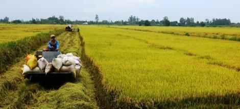Nâng giá trị sản xuất các loại lúa gạo ngon, chất lượng cao ở ĐBSCL