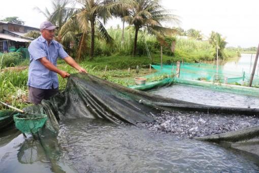 Giá cá tra giống khởi sắc