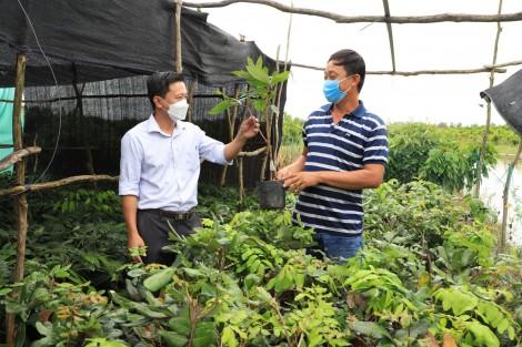 Tăng thu nhập với nghề ươm cây giống